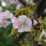 春の京都、北野西陣観光のついでにお一人様も気楽に寄れるお店(お昼編)