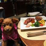 【東京】ペット(愛犬・ワンコ)と一緒に食事できるマイベストレストラン&カフェ10選