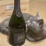 2020年マイベス「お酒大好き女子」のペアリングが楽しいお店(大阪&京都)