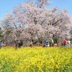熊本県南阿蘇の桜の名所「一心行の大桜」でお花見の後に行きたいランチセレクション♪