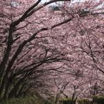 シーズン間近!徳島において,お花見に便利なお店