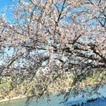 【埼玉北部】お花見しながらティータイムが過ごせるお店です。