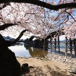 ペットとの花見後、広島/山口地区、ペットと極上のランチを味わう