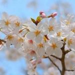 【東京】お花見1ランク上の差し入れ!
