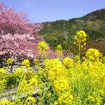 【京都・大阪】日本さくら名所100選に佇むお店や名所近くでお花見&食事