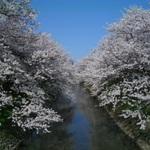 シーズン間近!富山市近郊でお花見に便利なお店