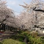 混雑がイヤな人のための北沢川緑道お花見のあとの、下北沢グルメスポット