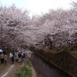 【神奈川県大和市】引地川沿い千本桜で花見をする時、テイクアウトしたい店
