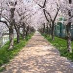 【京都】お花見に行くなら、絶品ランチボックス持参が正解♪