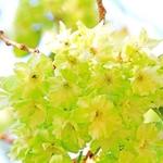 【京都】桜の名所の近くのお店にGO~✿