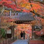 [京都]ゆるーいデートが好きな二人におススメのカフェ。
