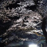 お花見のあとは富山県庁前・噴水公園そばエリアでしょb
