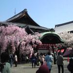 京都でお花見途中で寄りたい素敵なカフェ&甘味処