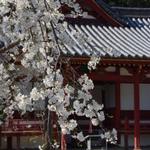 お花見デートの後は素敵な和歌山カフェランチ 厳選5店♫