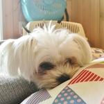 [愛知・香川] 可愛い動物たちが癒してくれるお店 [追補第3版]