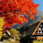 白川郷で色づく秋を楽しみながら食べ歩き【岐阜】