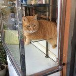 【 2月22日・猫の日 】猫を愛して、猫に愛されて『尾竹橋通り』 ~猫を感じる店巡り・2~