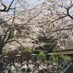 【東京】食事しながら花見できるカフェ&レストラン