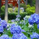 【京都の宇治・伏見稲荷】花の季節がオススメで~す(*゚▽゚)ノ