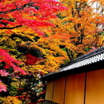 【滋賀】紅葉シーズンに訪れたい 湖東三山~彦根まとめ