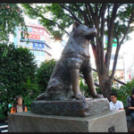 渋谷ではたらく私が厳選〜絶対ハズさない〜居酒屋10選