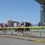 一緒にターフで夢みたい、JRA福島競馬場内グルメ
