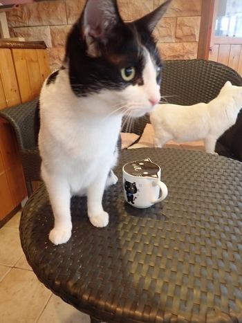 猫カフェ天使のこねこネコ