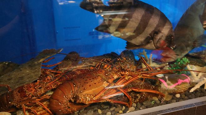 老香港酒家京都 - 料理写真:活魚水槽の海鮮もの