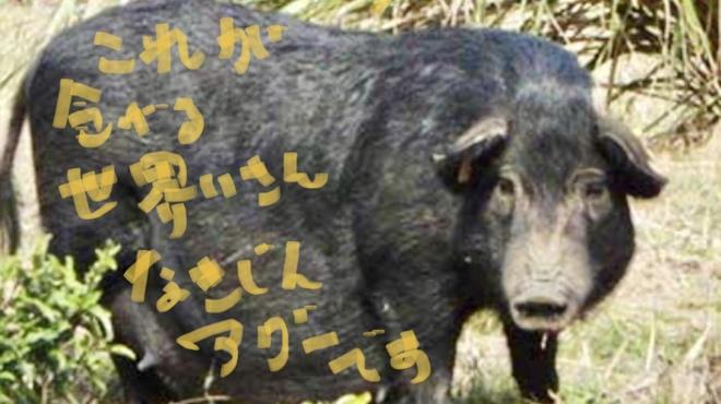 山猫軒 - メイン写真: