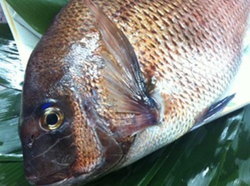 ステーキハウス ハマ - 料理写真:この時期の真鯛は「桜鯛」と呼ばれ、特に美味しいです!