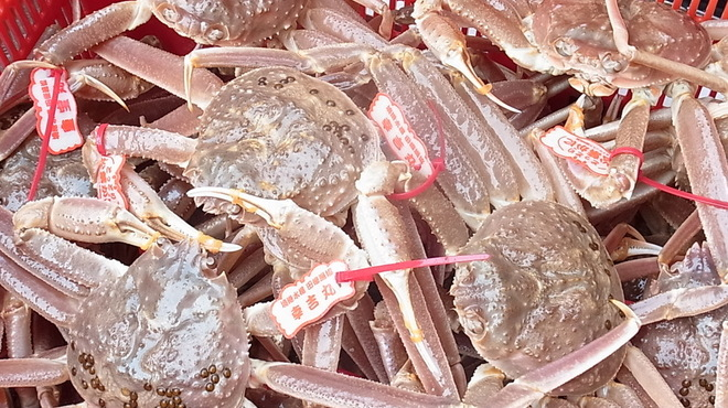 海鮮問屋 博多 - 料理写真:山陰の冬の味覚!松葉かに!