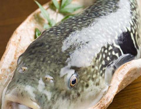 桐壺 - 料理写真:ふぐ料理は10月~3月末まで。美味しいふぐ料理が食べたいなら当店へ。