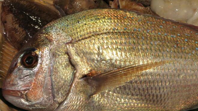 地酒と料理 高田馬場研究所 - 料理写真:明石漁港など各地から鮮魚を直送仕入れ!
