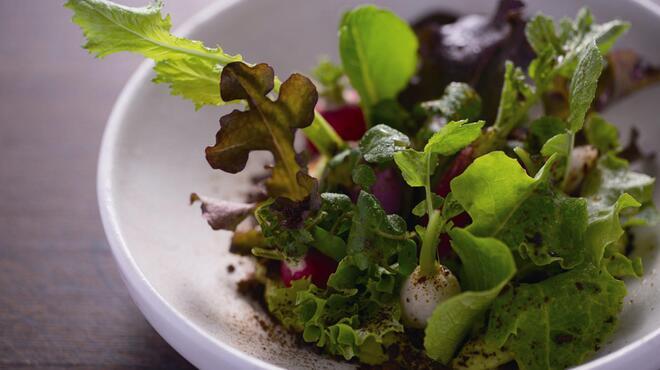信州松本ヒカリヤ - 料理写真:畑のサラダアボカドクリームとドライ醤油