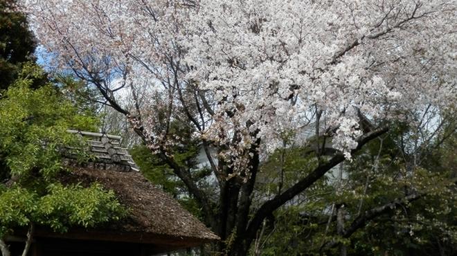 自家焙煎珈琲 森の響 - メイン写真: