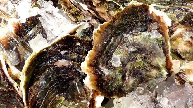 肴や 呉平 - 料理写真:島根産岩がき入荷しました