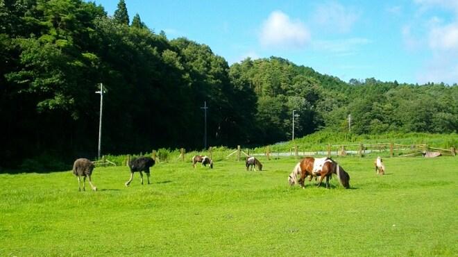 山田牧場 - メイン写真: