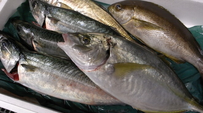 たくみ - 料理写真:旬の旨い魚が活け締めされて届きます!たくみに来たら魚を食べずには帰れません!!