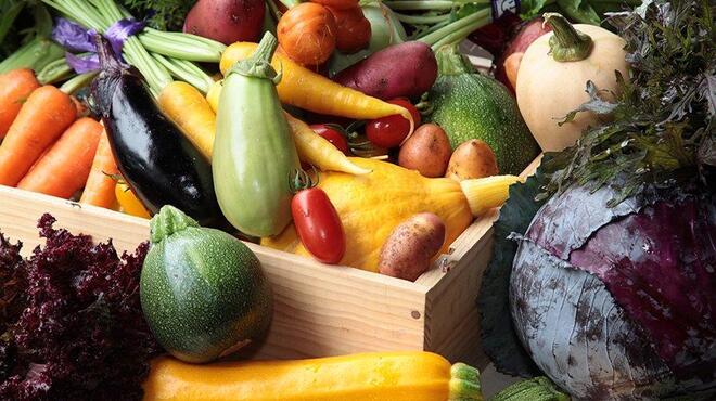 オイスターバー COVO - 料理写真:こだわりの朝採れ鎌倉有機野菜を直接買い付け!