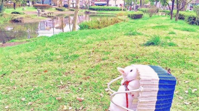 カンティーナ コニーリォ・ビアンコ - 外観写真:桜台公園から池越しにお店が見えます