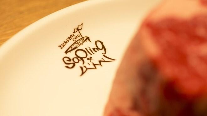 Sapling - メイン写真: