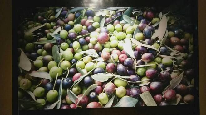 鉄板イタリアン ガイーナ バッカンテ - メイン写真: