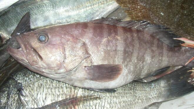 新世界菜館 - 料理写真:島根県野井漁港直送の鮮魚
