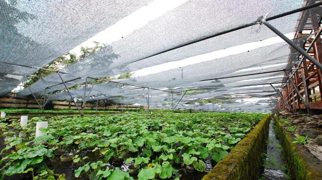 山葵と清流の里 ワビサビ - メイン写真: