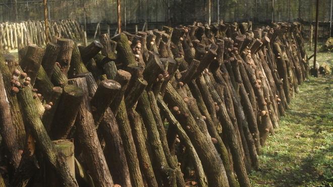 森の味処 なかむら  - メイン写真: