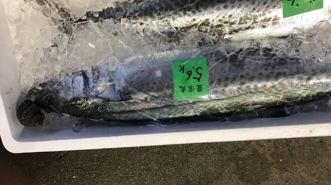 フレンチモンスター - 料理写真:お魚は漁師さんから直接届きます。さわら(2018.5)
