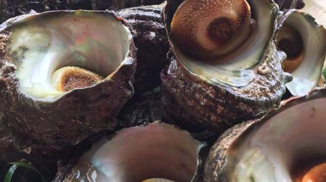 越前蟹の坊 - 料理写真:活サザエ