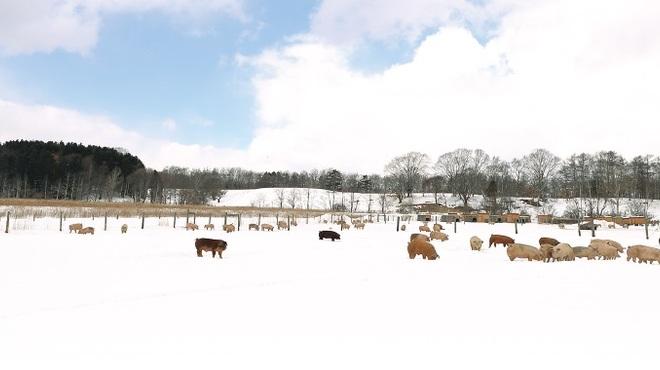 こな雪とんとん - メイン写真: