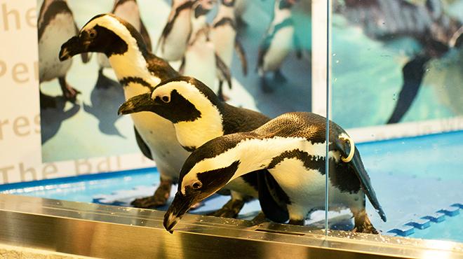 ペンギンのいるBAR - メイン写真: