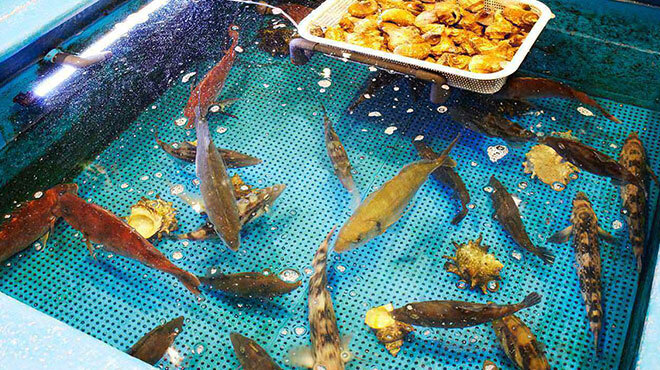 魚盛 - メイン写真: